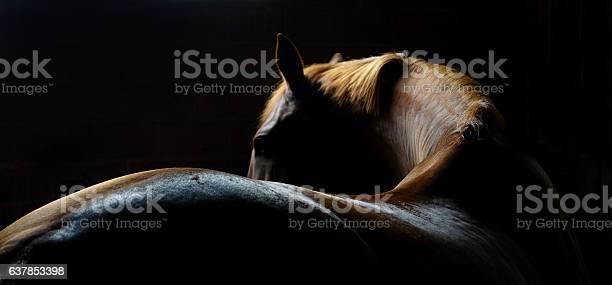 Horse back and mane picture id637853398?b=1&k=6&m=637853398&s=612x612&h=waqatzl2kvsb 89pfjdpestdllgkp8pry0pu qnbvds=