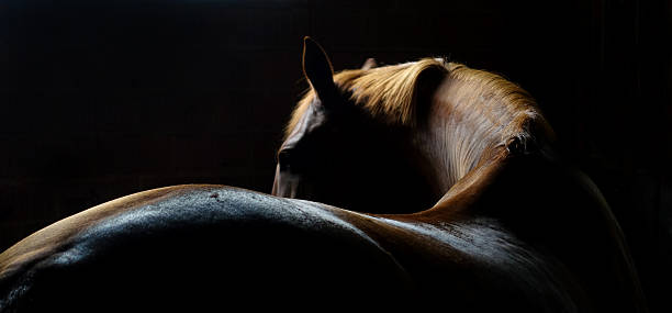 horse back and mane - horse stock pictures, royalty-free photos & images