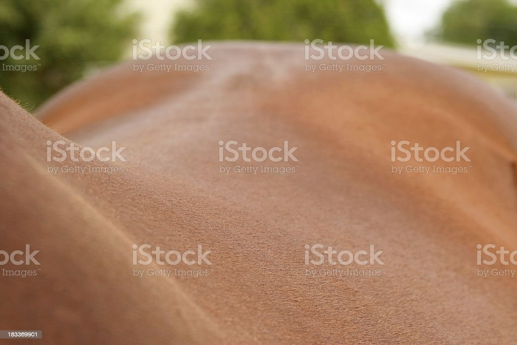 Horse Back and Spine stock photo