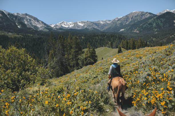 ロッキー山脈に乗った馬の背中 - 乗馬 ストックフォトと画像