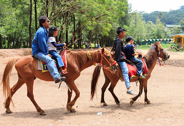 horse back riding - baguio city stock photos and pictures