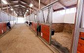 Horse Barn Animal Sport Paddock Equestrian Ranch Racing Stable
