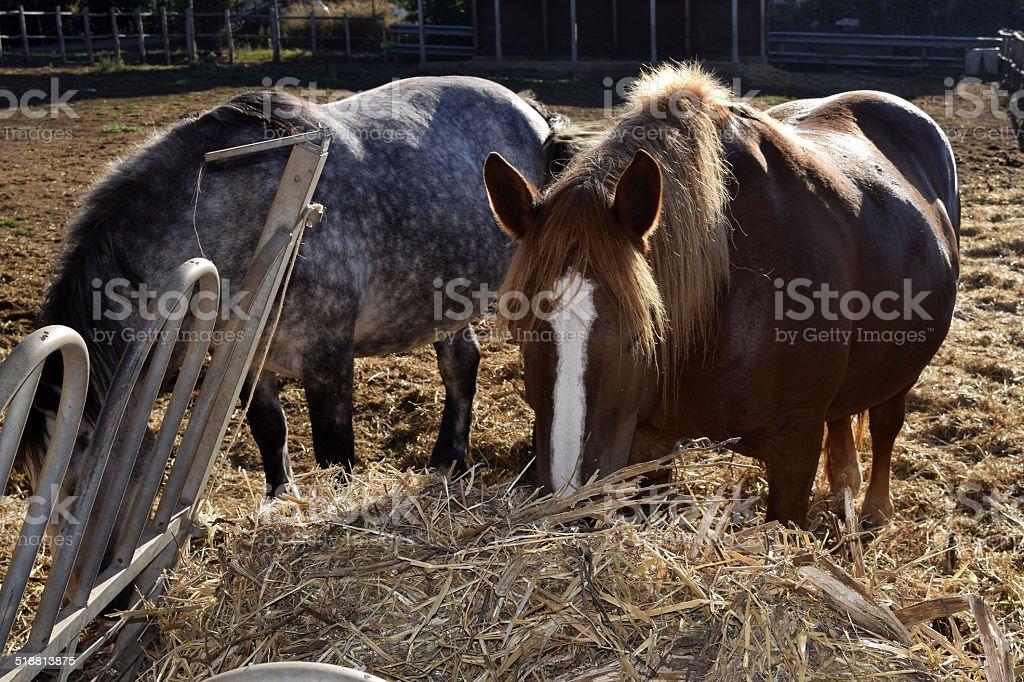 horse barn stock photo