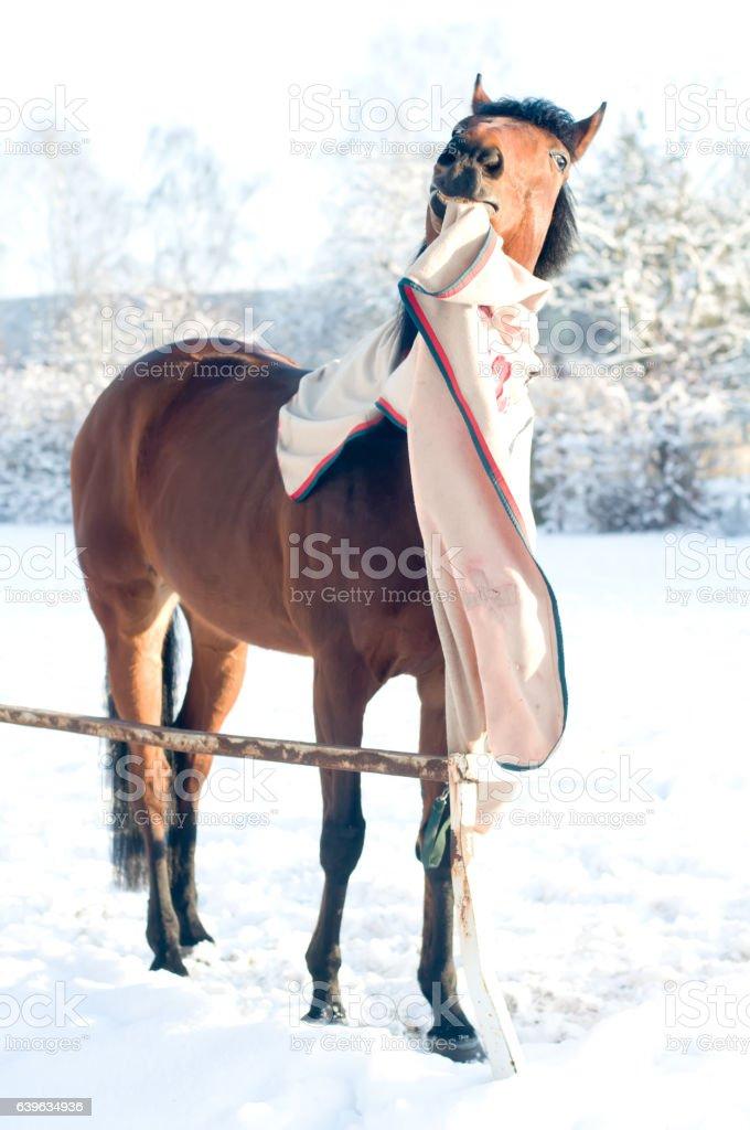 Horse bay color portrait stock photo