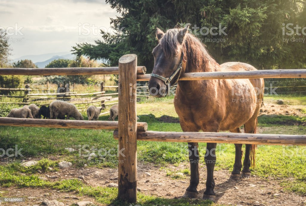 Horse behind a Fence stock photo