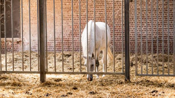 Pferd hinter Gittern – Foto