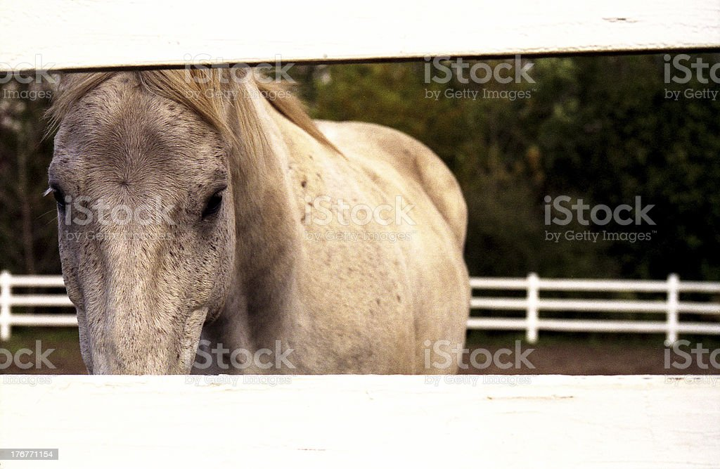 Horse Behind the Fence royalty-free stock photo