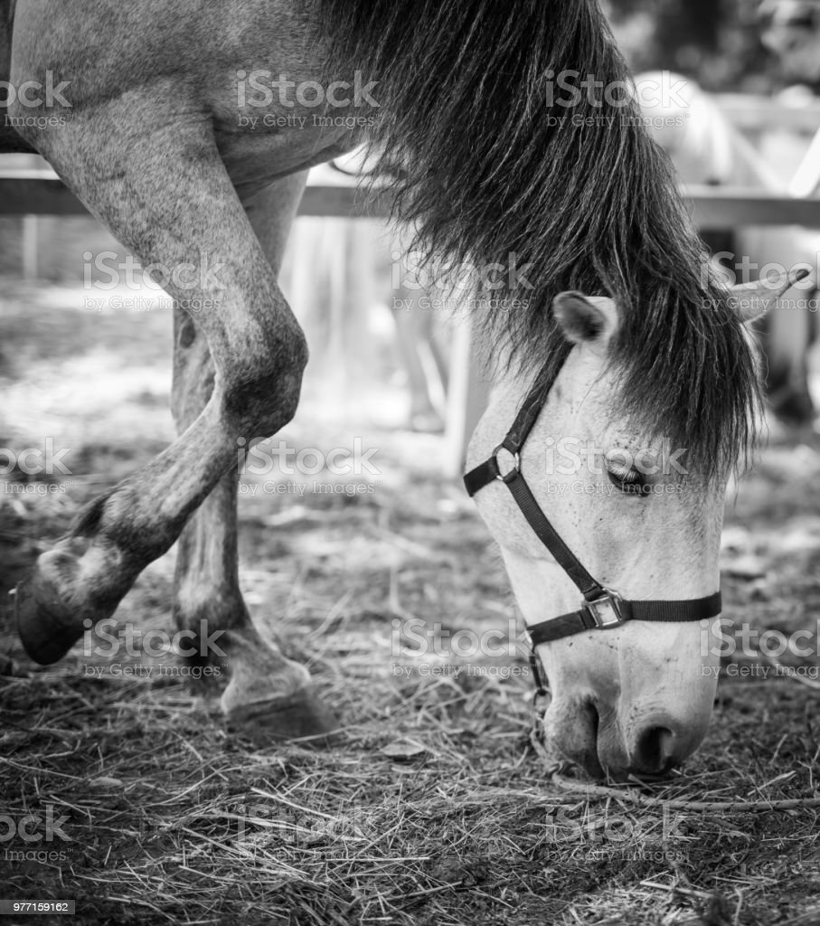 Horse behind wooden fence stock photo