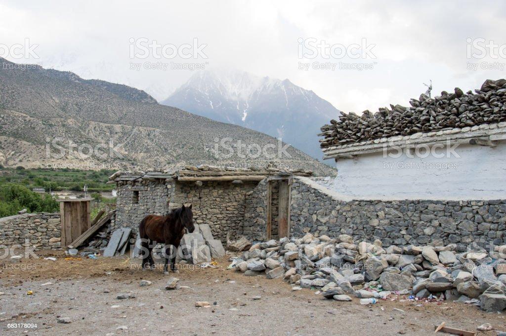 Ein Pferd neben einem gebrochenen Haus Lizenzfreies stock-foto