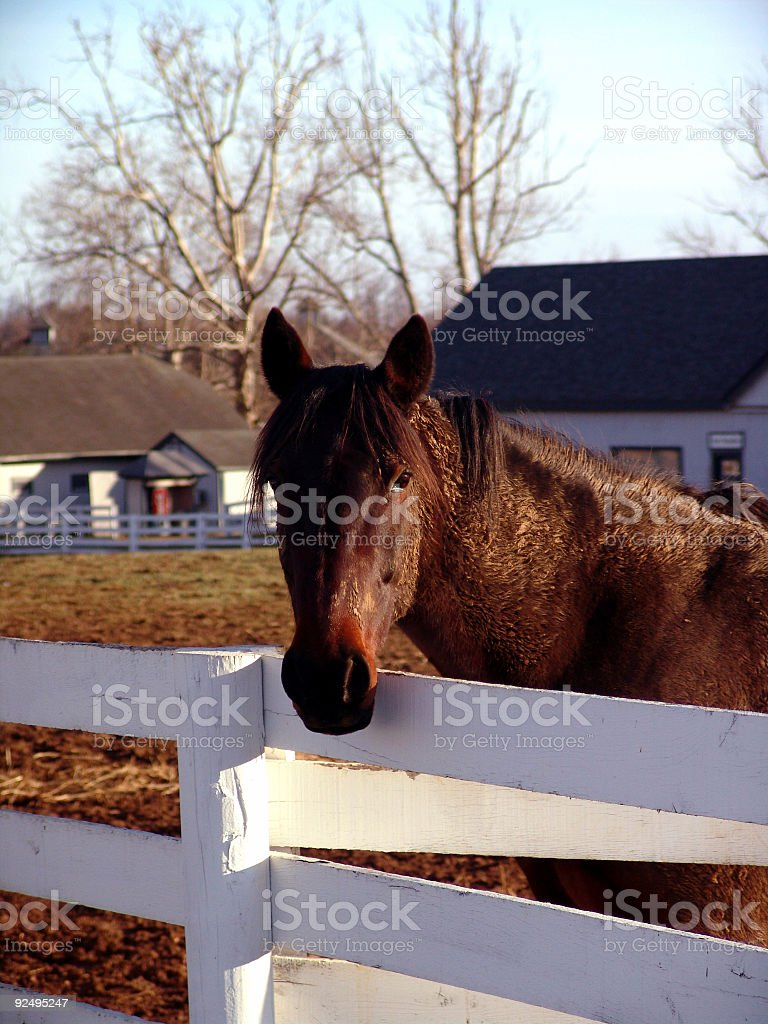 Horse beside Fence royalty-free stock photo