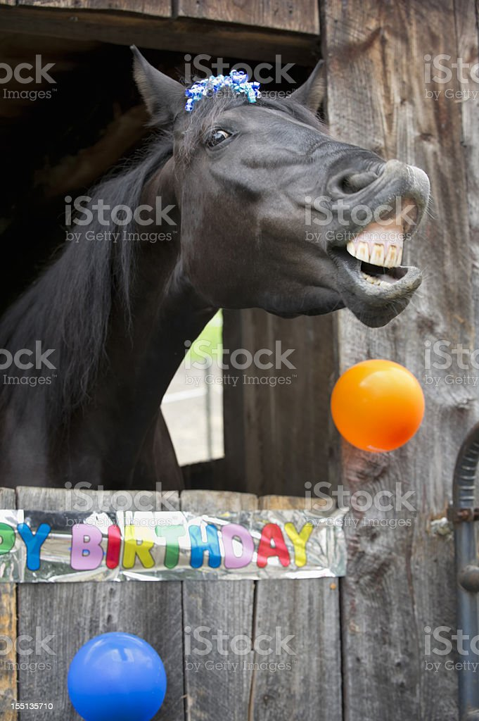 Horse Birthday Party Portrait, Toothy Grin stock photo
