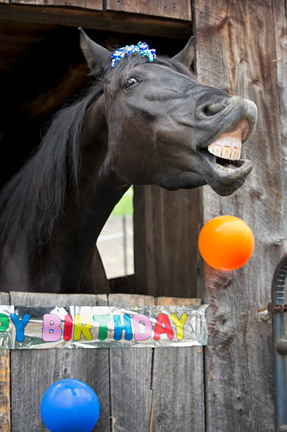 Top 60 Happy Birthday Horse Stock Photos Pictures And