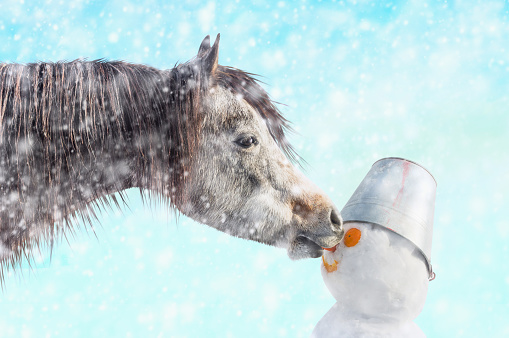 Horse bites off nose snowman, snow winter outdoor