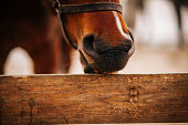 Wood - Material, Fence, Horse, Biting, Animal