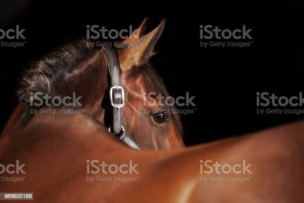 Horse black background picture id989600168?b=1&k=6&m=989600168&s=612x612&h=7k0beab8mitwa4ukqa8ibe6  c9dlrdiwqdobwlnwqs=