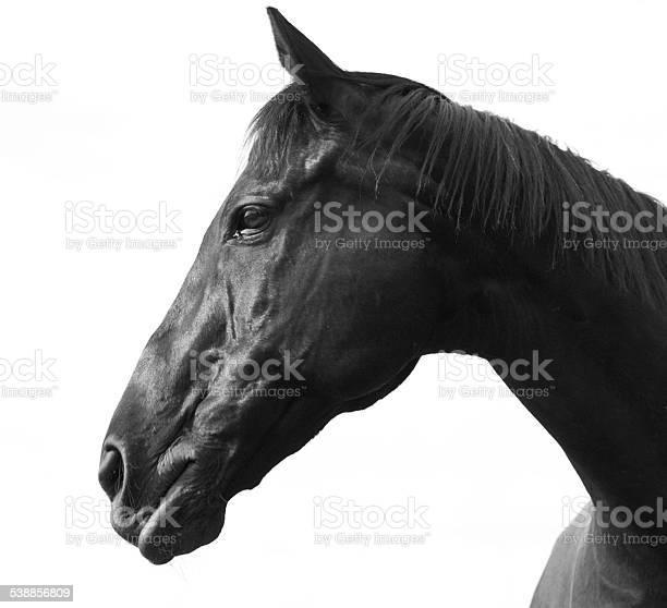 Horse black picture id538856809?b=1&k=6&m=538856809&s=612x612&h=3hz1zsepxmpk6bn66izpqyb7u 6gy3pauostr4rqov0=