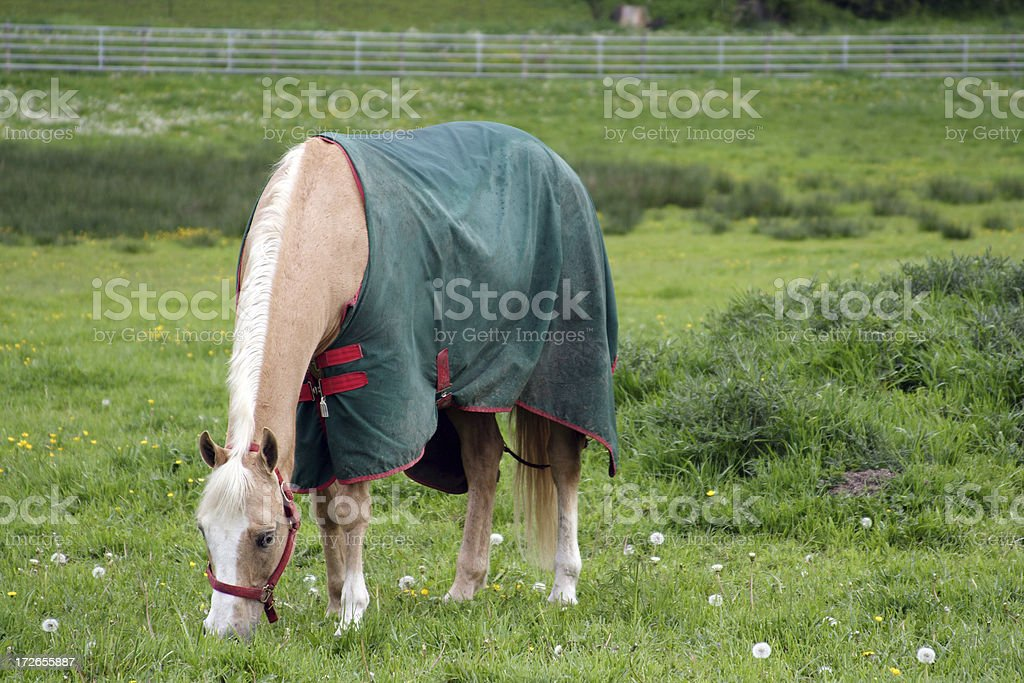 Horse Blanket 0001 stock photo