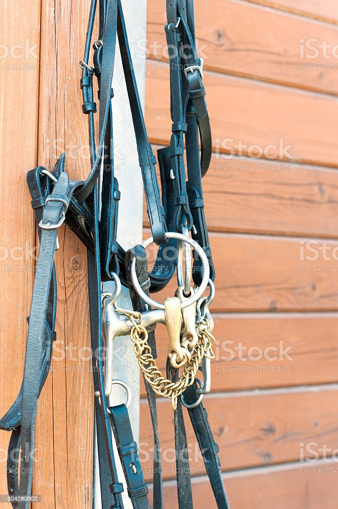 Horse bridle hanging on stable wooden wall. stock photo