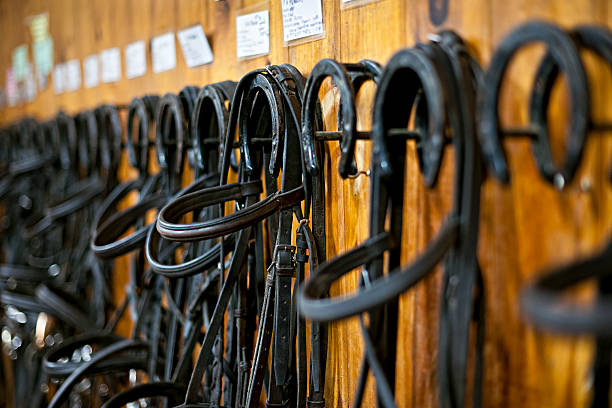 horse bridles hanging in stable - horse bit stock pictures, royalty-free photos & images