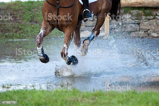 Horse cantering through a water splash picture id477837787?b=1&k=6&m=477837787&s=612x612&h=waoubvue6l3ras3vho1symjfvo5id0ucgqe2qt8g9qm=