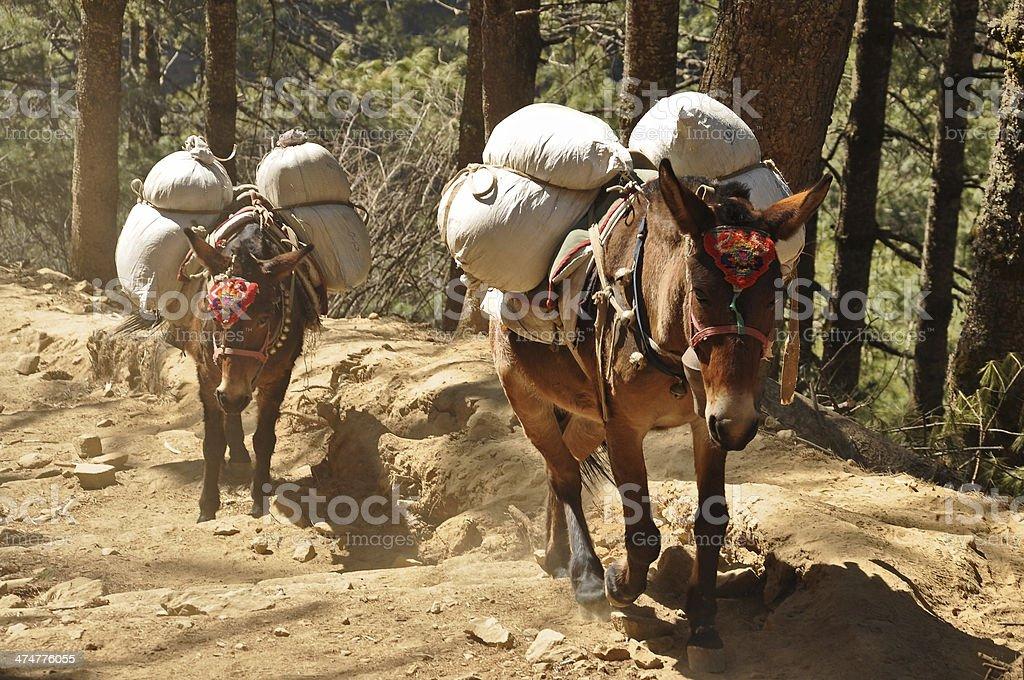 Horse caravan stock photo