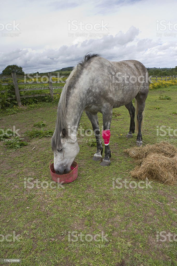 Horse care royalty-free stock photo