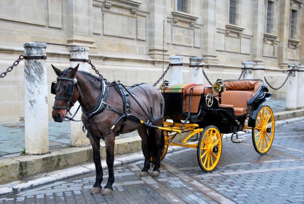 pferdekutsche 3 - pferdekutsche stock-fotos und bilder