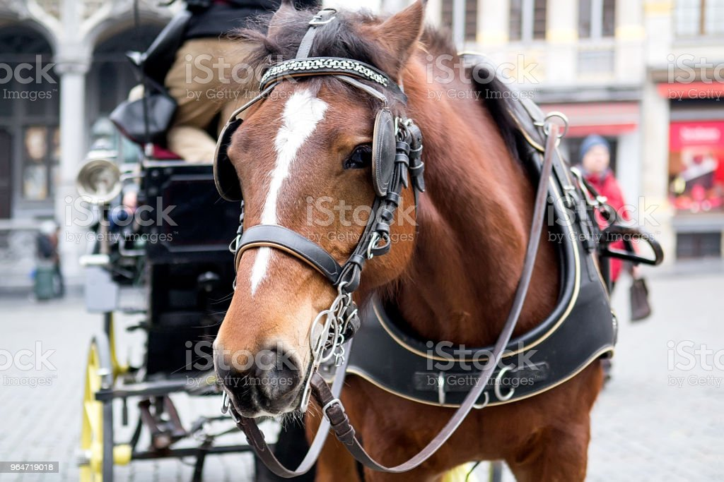 Horse carriage Brussels royalty-free stock photo