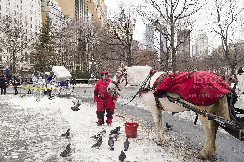Horse Carriage, Central park, New York City royalty-free stock photo
