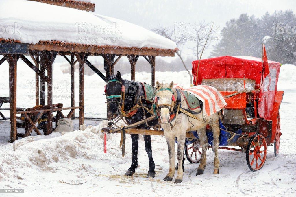 말 운반비 in Abant 자연 공원 - 로열티 프리 0명 스톡 사진
