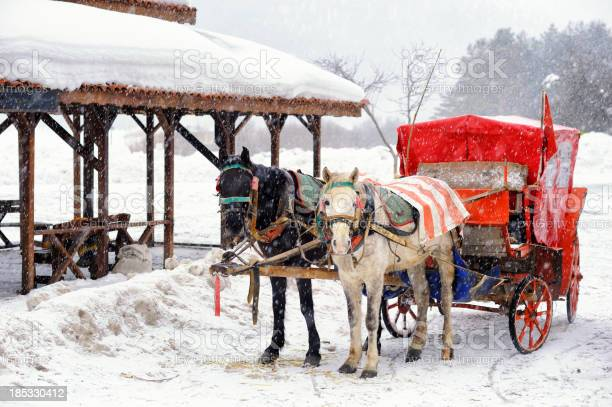 말 운반비 In Abant 자연 공원 0명에 대한 스톡 사진 및 기타 이미지