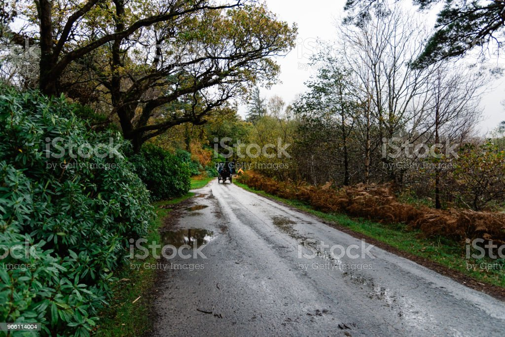 Horse carriage in road in garden of Muckross House  in Ireland - Royalty-free Beauty In Nature Stock Photo