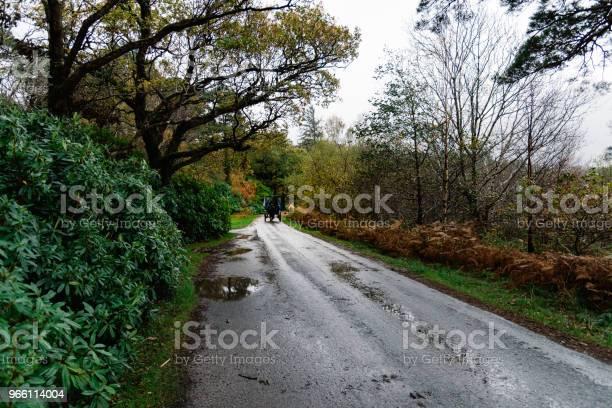 Hästskjuts I Vägen I Trädgården Av Muckross House I Irland-foton och fler bilder på Berömd plats