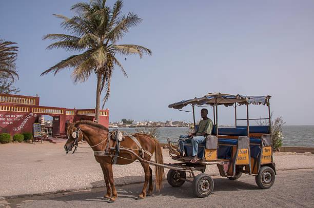 horse carriage in saint louis - st louis стоковые фото и изображения