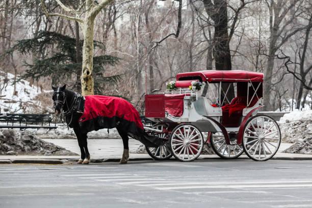eine pferdekutsche in der nähe von central park - pferdekutsche stock-fotos und bilder