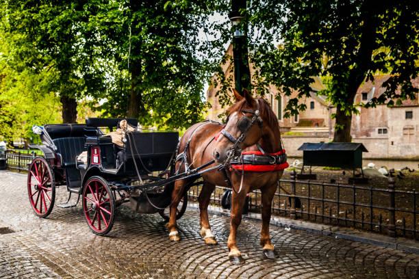 馬車 - 載客馬車 個照片及圖片檔