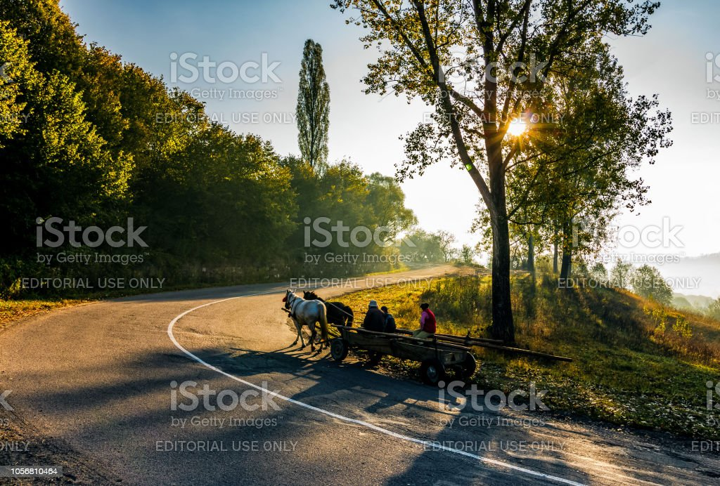 horse cart on serpentine in countryside area stock photo