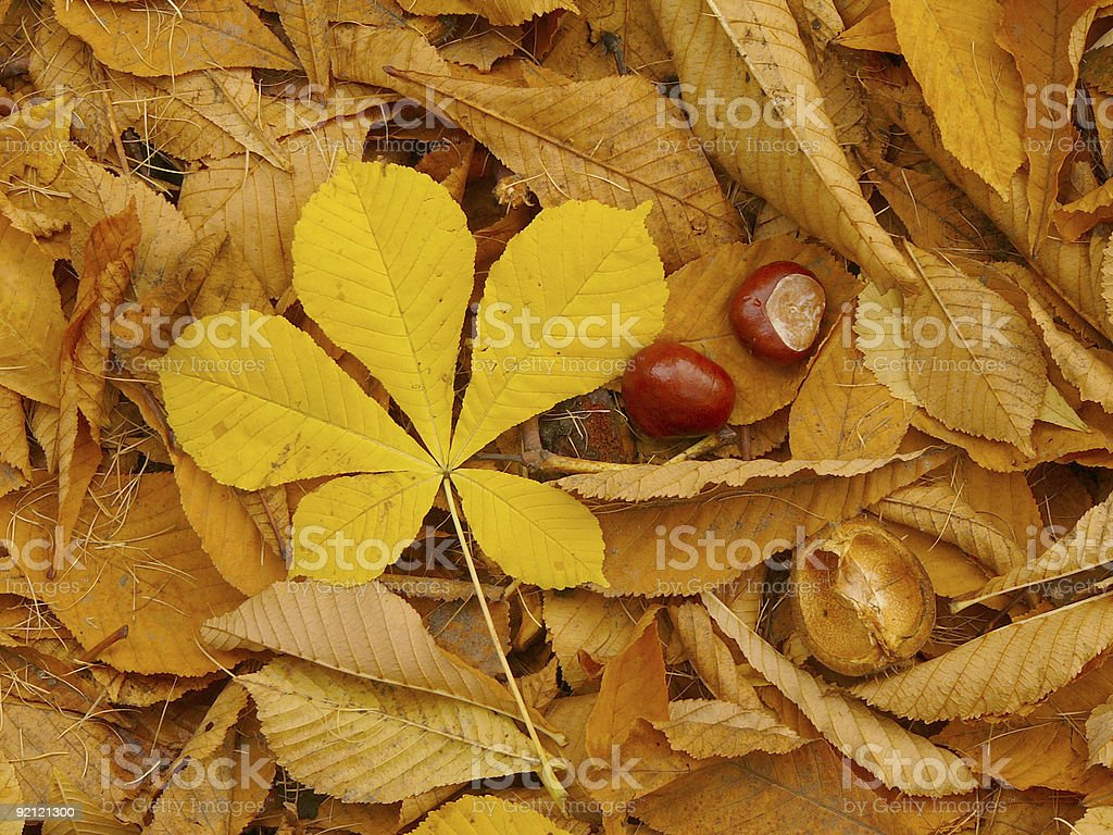 Horse Chestnut patchwork royalty-free stock photo