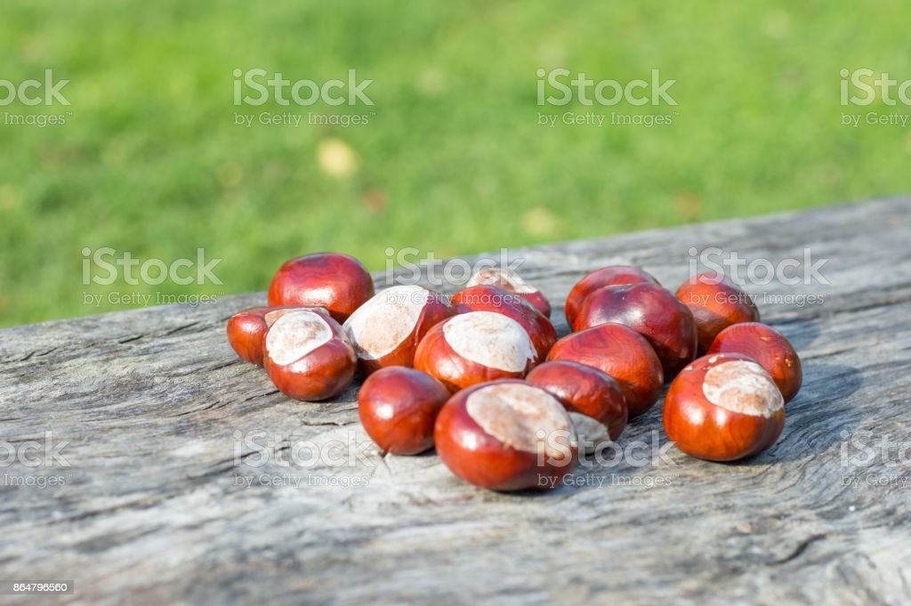 Horse chestnuts. stock photo