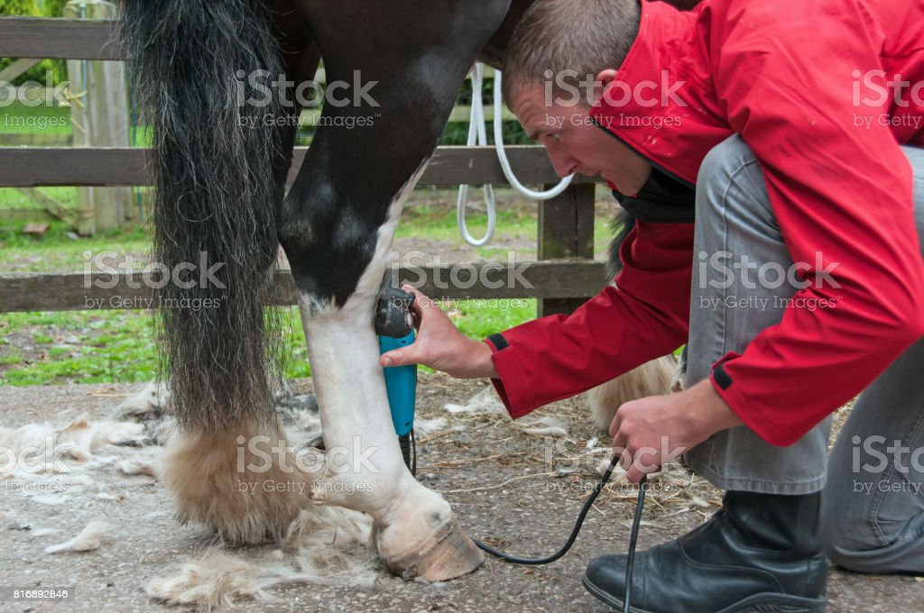 Horse clipping stock photo