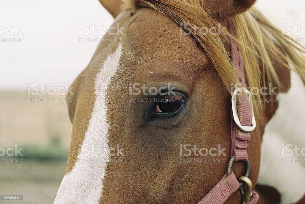 Horse close up royalty-free stock photo