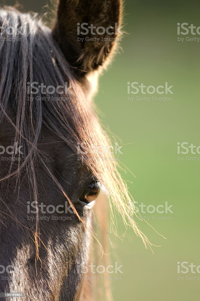Horse close-up royalty-free stock photo