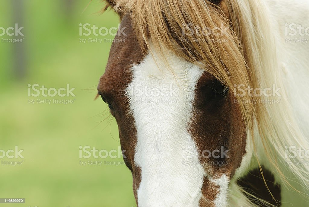 Horse Closeup stock photo