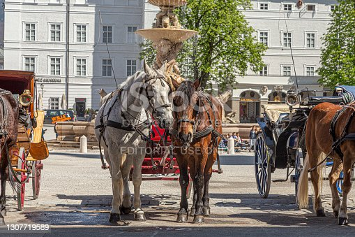 Salzburg, Austria - April 21, 2015: horse coaches are ready for tourist rides in the old town of Salzburg in Austria.