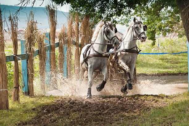 Cheval de concurrence - Photo