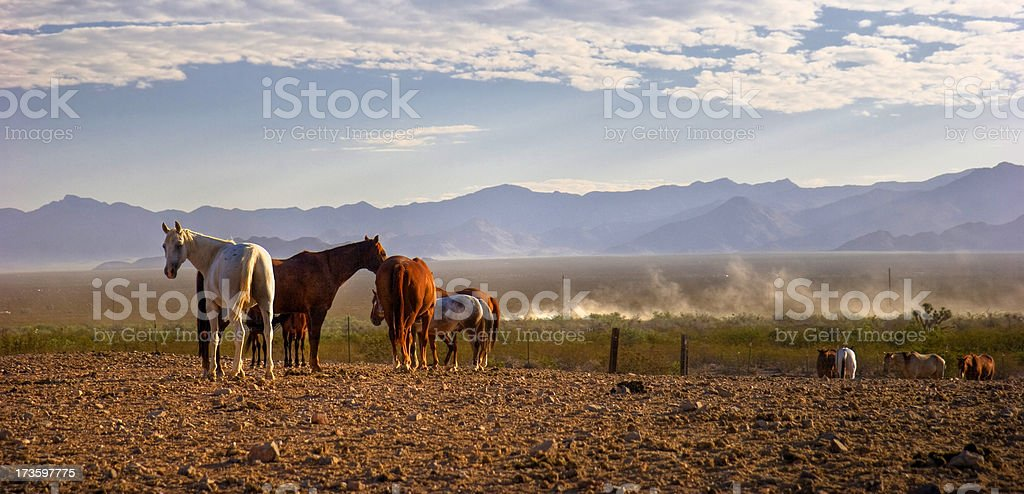 Horse coral royalty-free stock photo