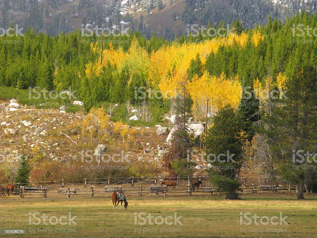 Horse Corral  Autumn Teton Mountains royalty-free stock photo