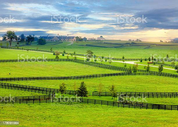 Photo of Horse country