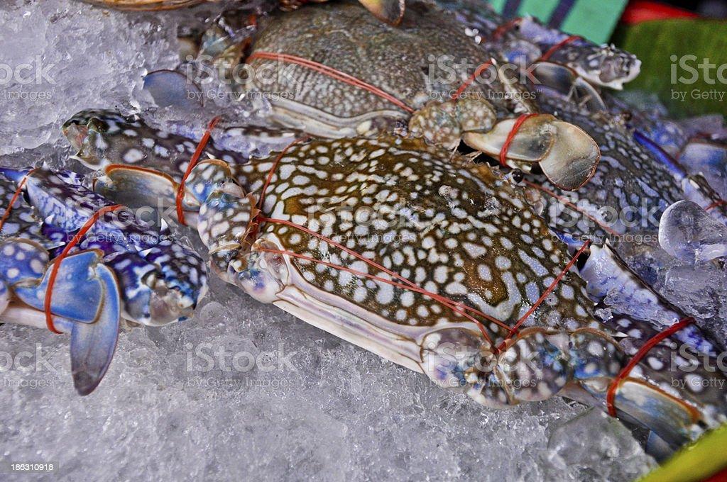 Horse crab on ice,Thailand market royalty-free stock photo