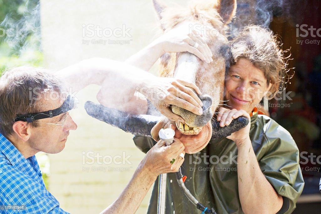 Royalty Free Vet Horse Smiling Human Teeth Pictures Images And
